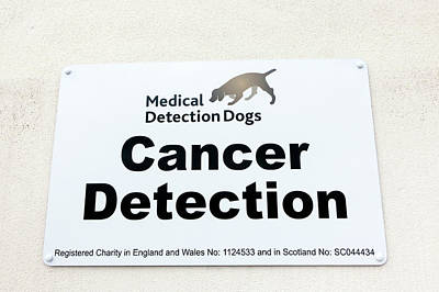 Working Dogs Photograph - Medical Detection Dogs Sign by Louise Murray