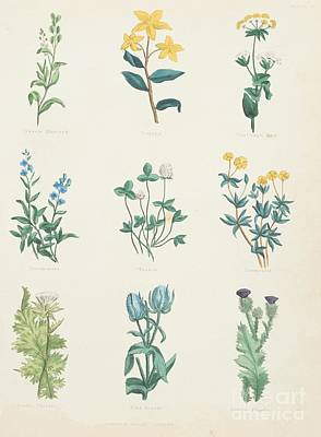 Photograph - Medicinal Herbs by Sheila Terry