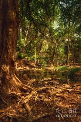 Tree Roots Digital Art - Medina River Cypress Trees by Priscilla Burgers