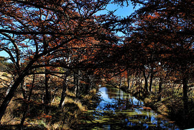 Photograph - Medina River In Fall  by Judy Vincent