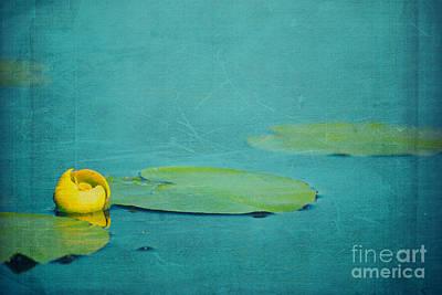 Photograph - Meditation by Aimelle