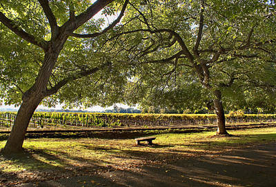 Photograph - Meditation At The Vineyards by Abram House