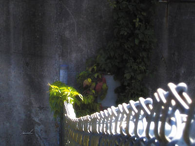 Photograph - Meditation In Sunlight 19 by The Art of Marsha Charlebois