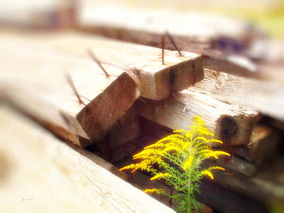 Photograph - Meditation In Sunlight 47 by The Art of Marsha Charlebois