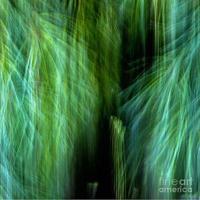 Meditations On Movement In Nature Art Print