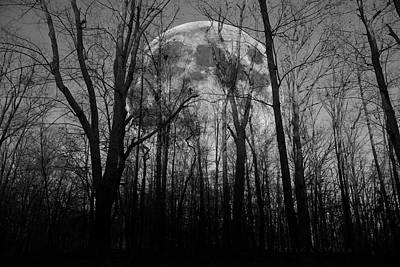 Light And Dark Photograph - Meditative Forest Wanderer  by Betsy Knapp