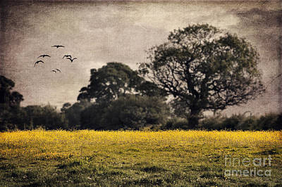 Flock Of Bird Photograph - Medow by Svetlana Sewell