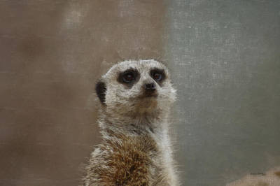 Meerkat Digital Art - Meerkat 5 by Ernie Echols