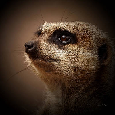 Meerkat Wall Art - Photograph - Meerkat 6 by Ernie Echols