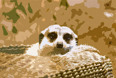 Photograph - Meerkat by Carol McCarty