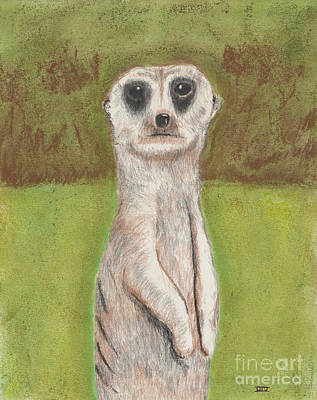 Meerkat Drawing - Meerkat by David Jackson