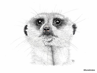 Meerkat Drawing - Meerkat by Hanneke Messelink-Anders