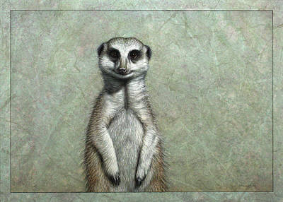 African Animals Drawing - Meerkat by James W Johnson