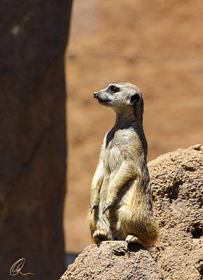 Photograph - Meerkat Lookout by Chris Thomas
