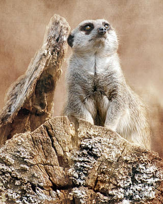 Concentration Digital Art - Meerkat On A Mount by Linsey Williams