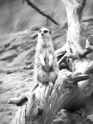 Meerkat Digital Art - Meerkat On Guard Drawing by Roy Pedersen