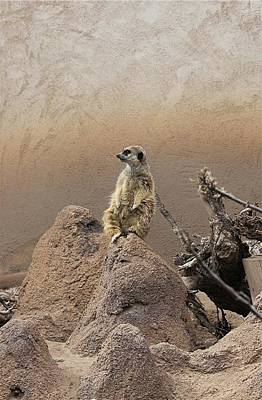 Cheyenne Mountain Zoo Photograph - Meerkat On Guard Duty by Diane Alexander