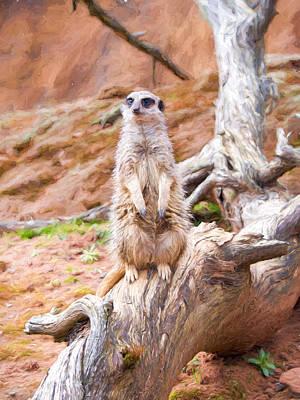 Meerkat Digital Art - Meerkat On Guard Painting by Roy Pedersen
