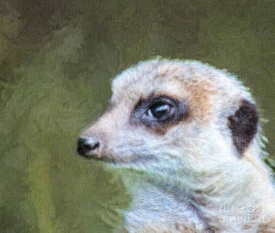 Meerkat Digital Art - Meerkat Portrait Suricata Suricatta by Liz Leyden