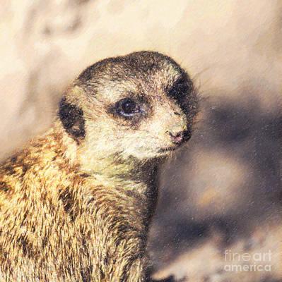 Meerkat Digital Art - Meerkat Suricata Suricatta by Liz Leyden