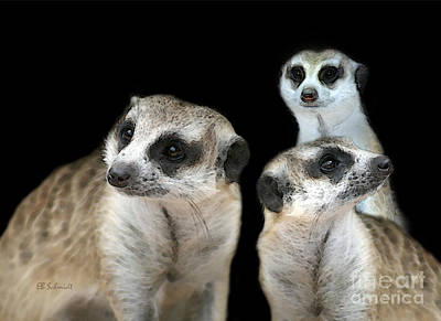 Meerkat Mixed Media - Meerkat Trio by E B Schmidt