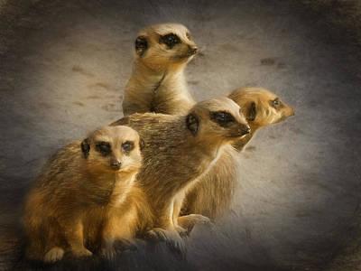 Photograph - Meerkat Watch by Ian Merton