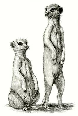 Meerkat Drawing - Meerkatte by Heidi Kriel