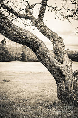Infared Photograph - Meet Me Under The Old Apple Tree by Edward Fielding