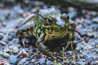 Friendly Digital Art - Meet The Frog by Eti Reid
