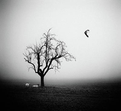 Lonely Tree Wall Art - Photograph - Meeting In The Morning Mist by Holger Droste