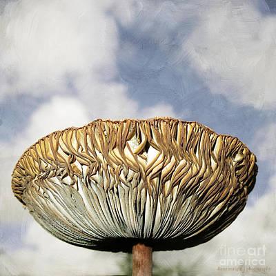 Photograph - Mega Mushroom IIi by Diane Enright