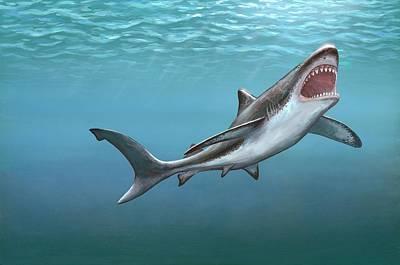 Monster Photograph - Megalodon Prehistoric Shark by Richard Bizley