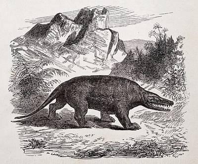 Megalosaurus Dinosaur Print by Paul D Stewart