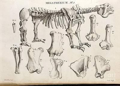 Megatherium, Cuvier Plate, 1804 Art Print by Paul D. Stewart