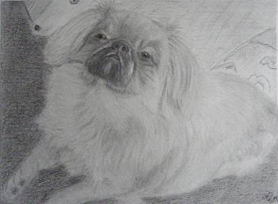 Confident Drawing - Megi's Dog by Thomas McCaskie