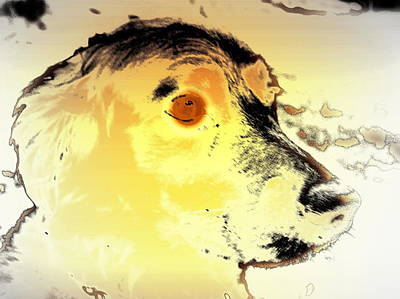 Belong Dead Photograph - Feeling Like The Most Melancholic Dog In The World  by Hilde Widerberg