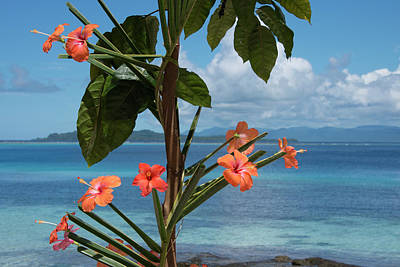 Cindy Photograph - Melanesia, Solomon Islands, Island by Cindy Miller Hopkins