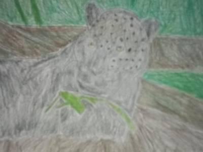 Melanistic Jaguar Drawing On Paper Art Print by William Sahir House