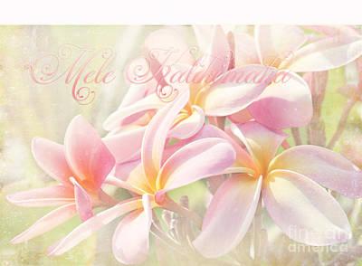 Photograph - Mele Kalikimaka - Pink Plumeria - Hawaii by Sharon Mau