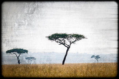 Photograph - Mellow Mara Acacias by Mike Gaudaur