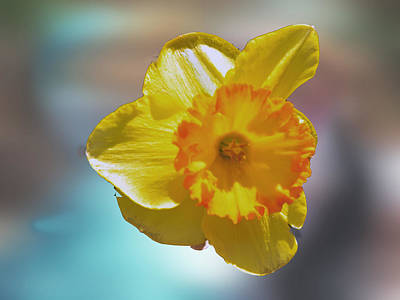 Photograph - Mellow Yellow by Helen Haw