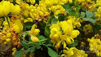 Photograph - Mellow Yellow by Julie Koretz