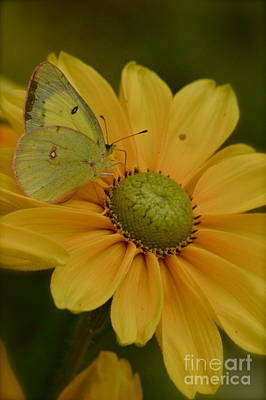 Photograph - Mellow Yellow by Tim Good