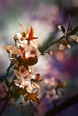 Bokeh Photograph - Melody Of Light by Saami Ansari