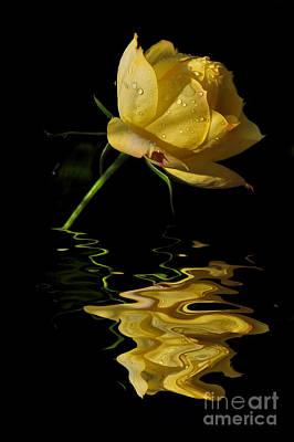 Photograph - Melting Rose by Kaye Menner
