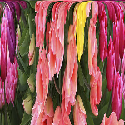 Photograph - Melting Tulips by Wes and Dotty Weber