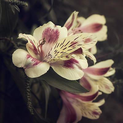 Peruvian Lily Photograph - Memories by Darlene Kwiatkowski