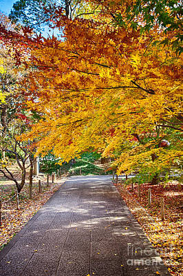 Photograph - Memories Of Autumn-2 by Tad Kanazaki