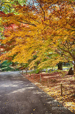 Photograph - Memories Of Autumn-3 by Tad Kanazaki