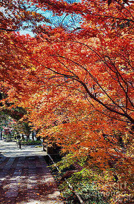 Photograph - Memories Of Autumn-5 by Tad Kanazaki